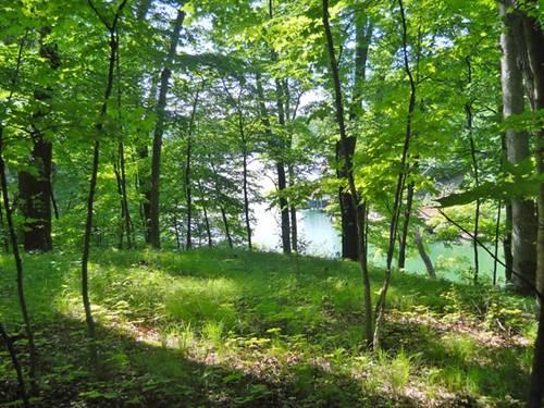 272 Elm Tree, Varna, IL 61375