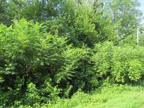 0 Evergreen, Wilmington, IL 60481