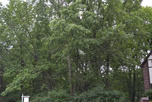 12821 Pheasant, Homer Glen, IL 60491