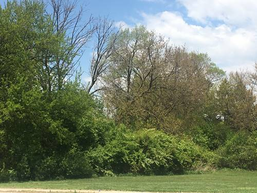 Lot 12 N Maple, Downers Grove, IL 60515