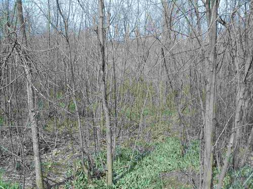 144 Forest, Fox Lake, IL 60020