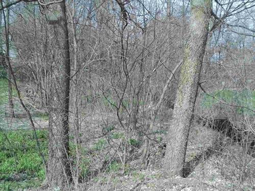 138 Forest, Fox Lake, IL 60020