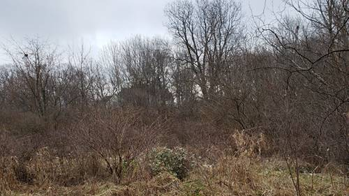 LOT 15 Forest Trail, Campton Hills, IL 60175