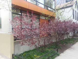 839 N Hermitage Unit 102, Chicago, IL 60622 Noble Square