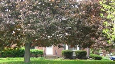 2001 Woodlawn, Northbrook, IL 60062