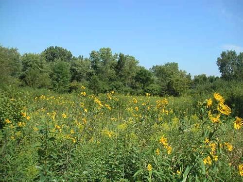 1075 Alderwood, Lake Forest, IL 60045